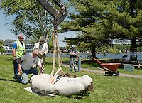 "With the use of his crane Stephen Green swings his 2000 lb granite sculpture ""Advantage"" into position with Meredith DPW Operations Manager Paul Ristaino and Meredith Scuplture Walk Chairman Bev Lapham at Hesky Park Tuesday afternoon.   (Karen Bobotas/for the Laconia Daily Sun)"
