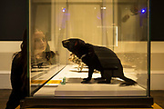 A National Science week event featuring Tasmanian devil public displays and conservation awareness talks.