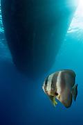 The wrecks of Truk Lagoon : Hoki Maru