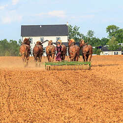 An Amish woman in Lancaster County uses a team of horses to prepare a field for planting.