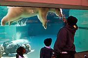 Polar bear exhibit at the Lincoln Park Zoo Chicago, IL, USA.