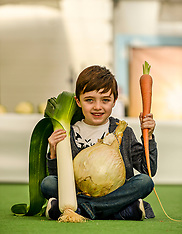 Giant vegetables on display at famous annual show, Gourock, 23 September 2018
