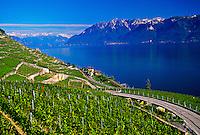 Vineyards along Lake Geneva (near Montreux), Switzerland