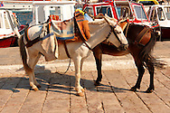 Pack Ponies waiting to be loaded with goods on Hydra,  Greek Saronic Islands. .<br /> <br /> Visit our GREEK HISTORIC PLACES PHOTO COLLECTIONS for more photos to download or buy as wall art prints https://funkystock.photoshelter.com/gallery-collection/Pictures-Images-of-Greece-Photos-of-Greek-Historic-Landmark-Sites/C0000w6e8OkknEb8