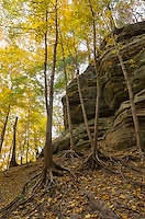 This was my first time visiting Starved Rock in the fall. The colors were gorgeous, especially in the area just west of LaSalle Canyon.