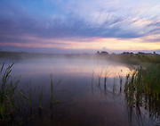 """Foggy sunrise over Springfield Bog pond.<br /> <br /> Available sizes:<br /> 11"""" x 14"""" print <br /> <br /> See Pricing page for more information. <br /> <br /> Please contact me for custom sizes and print options including canvas wraps, metal prints, assorted paper options, etc. <br /> <br /> I enjoy working with buyers to help them with all their home and commercial wall art needs."""
