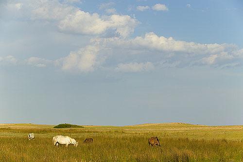South America, Uruguay, Rocha, Laguna de Rocha, horses
