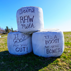 Ronks, PA / USA - March 7, 2020: An Amish farmer uses plastic covering on hay bales in Lancaster County, Pennsylvania as a sign to sell Raw Milk, which is good for bones and the gut.