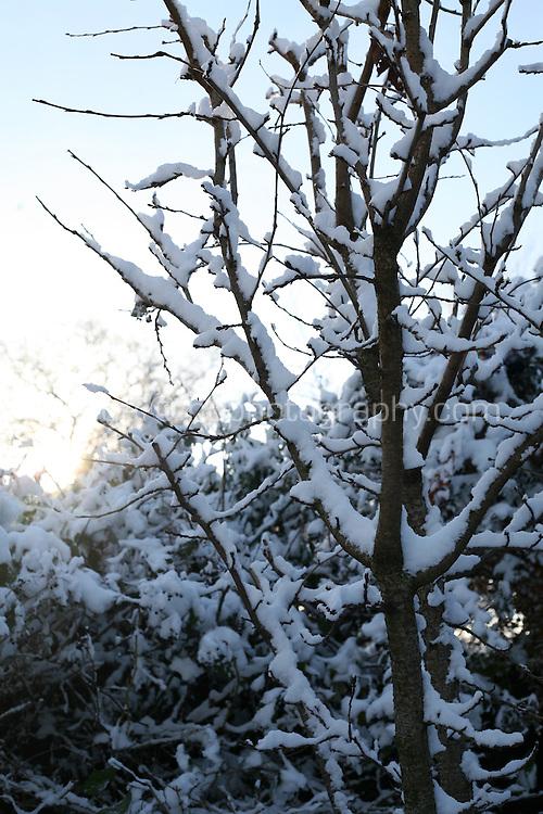 Snow covered tree in Dublin Ireland November 2010