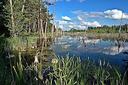 Zarastające jezioro w okolicach Węgorzewa