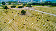 Aerial photography. Elevated view of agricultural fields in Menashe Valley, Israel