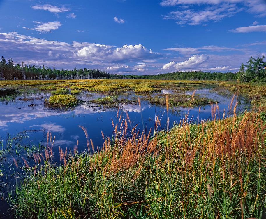 Petit Manan National Wildlife Refuge, fresh water marsh & reflections, Steuben, ME