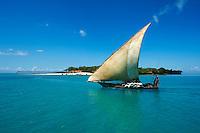 Tanzanie, archipel de Zanzibar, île de Unguja (Zanzibar), ile Bowe ou Prison island  // Tanzania, Zanzibar island, Unguja, Bowe island or Bowe island