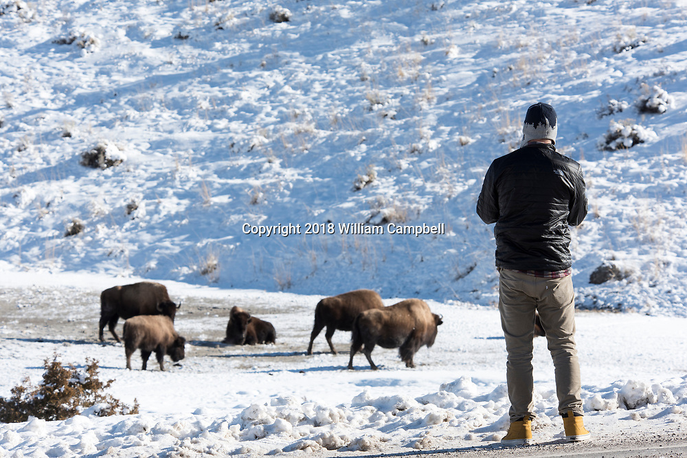 YELLOWSTONE NATIONAL PARK, WY-JANUARY 21-A visitor watches bsion at Mammoth Hot Springs in Yellowstone National Park during the government shutdown. Visitors are allowed to enter the park with the understanding that there are no government services due to the government shutdown. (Photo by William Campbell/Corbis via Getty Images)