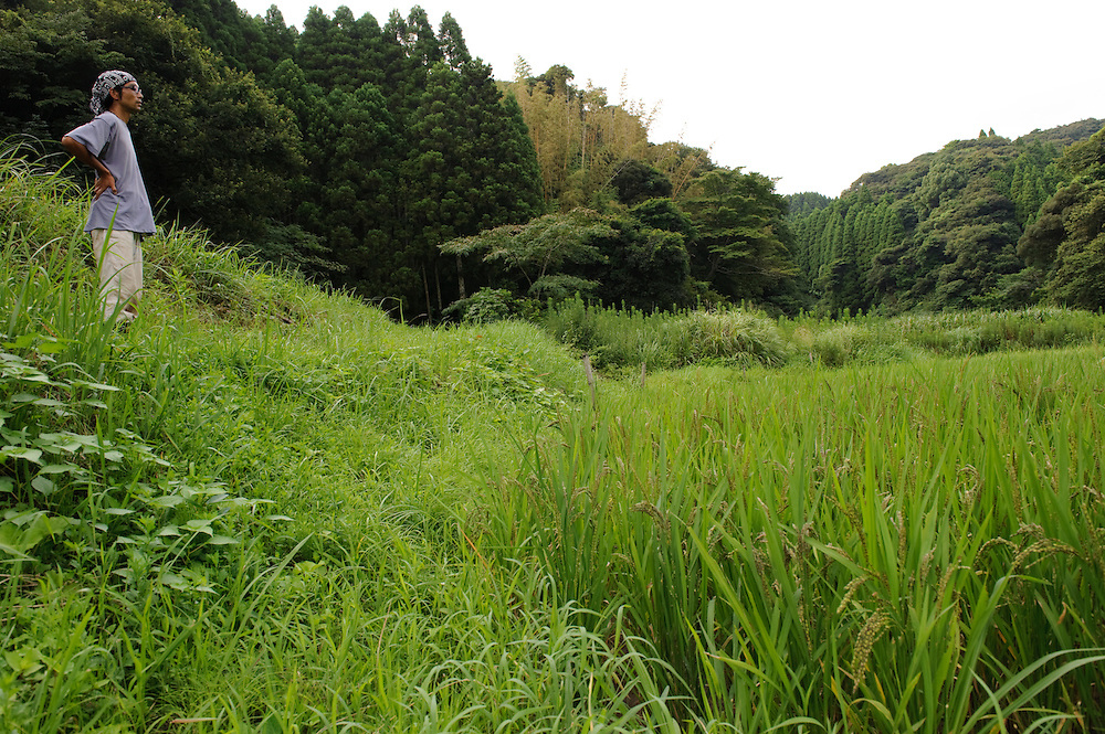 Staff Yosuke Watanuki looks over a rice paddy belonging to Brown's Field, Isumi, Chiba Prefecture, Japan, August 8, 2009.The organic farm introduces healthy and sustainable living in the Japanese countryside. It is staffed by the Brown family and volunteers from around the world.