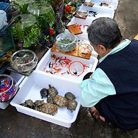 Asia, China, Chongqing. Local street market vendor and aquatic pets in the city of Chongqing.
