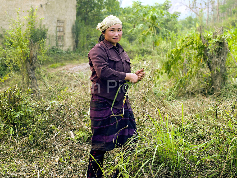Portrait of a Tai Yang ethnic minority subsistence farmer harvesting lemongrass from her garden, Ban Long Nai, Phongsaly province, Lao PDR. Besides rice, Lao farmers also grow a variety of other food crops to supplement their diet. In addition to vegetables grown in the fields alongside the rice, subsistence farmers often have a garden nearby the house where they grow other edible greens such as beans, squashes, onion, garlic, ginger and aromatic herbs.
