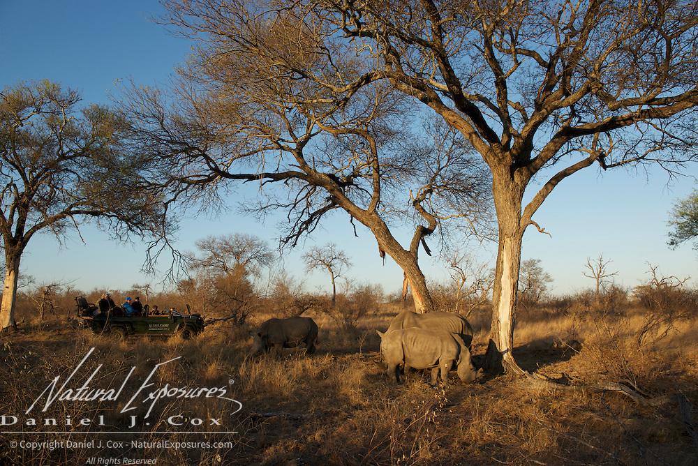 White Rhino, Timbavati, Game Reserve, South Africa.