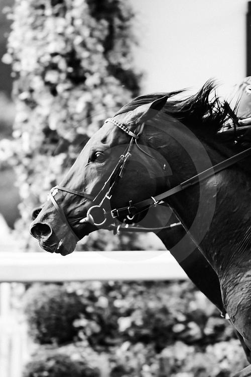 Baghdad (R. Moore) wins The Duke of Edinburgh Stakes at Royal Ascot, 21/06/2019, photo: Zuzanna Lupa