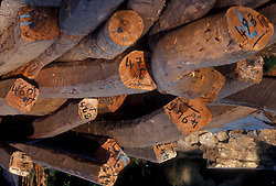 Stock photo of labelled trees and logs