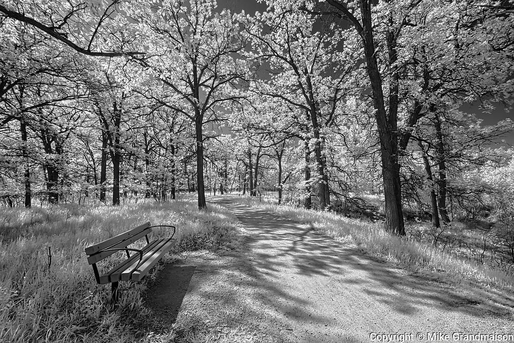Trail in Seine River Forest<br />Winnipeg<br />Manitoba<br />Canada