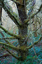 Tree at Leadbetter Point State Park, Long Beach, Washington, US