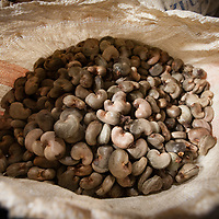 A sack of unprocessed cashew in the APRAINORES warehouse. APRAINORES is a primary producer association of over 60 families located near San Carlos Lempa, at the mouth of the Lempa River in El Salvador. Families are ex-combatents from the FMLN and subsistence farmers whose main cash income is from small cashew plantations. Together they own a processing plant employing around 60 workers for several months a year. All the cashew production is certified Fairtrade.