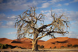 NAMIBIA SOSSUSVLEI 21APR14 - General view of dead trees and sand dunes in the Sossusvlei in the Namib Desert, Namibia.<br /> <br /> Sossusvlei is a salt and clay pan surrounded by high red dunes, located in the southern part of the Namib Desert, in the Namib-Naukluft National Park, which is one of the major visitor attractions of Namibia.<br /> <br /> jre/Photo by Jiri Rezac<br /> <br /> © Jiri Rezac 2014