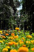 Goiania_GO, Brasil...Bosque dos Buritis na cidade de Goiania...The Bosque dos Buritis in Goiania city...Foto: BRUNO MAGALHAES / NITRO