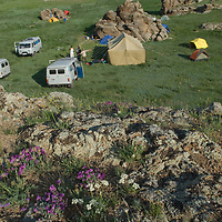 """Wildflowers grow above an archaeologists' camp at Ulaan Tolgoi (""""Red Hill""""), west of Lake Erkhel and north of Muren, Mongolia."""