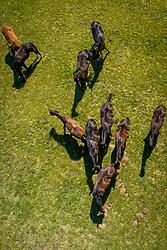 Jaarlingen op de weide<br /> het Trichelhof - Eindhout 2020<br /> © Hippo Foto - Dirk Caremans<br />  13/06/2020
