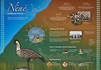 Hawaiian Goose - Nene (Branta sandvicensis). Haleakala National Park. Maui, Hawaii. Image taken with a Nikon D3x camera and 70-300 mm VR lens.