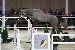 038 - Millais<br /> Hengstenkeuring BWP - Azelhof - Koningshooikt 2015<br /> ©  Dirk Caremans