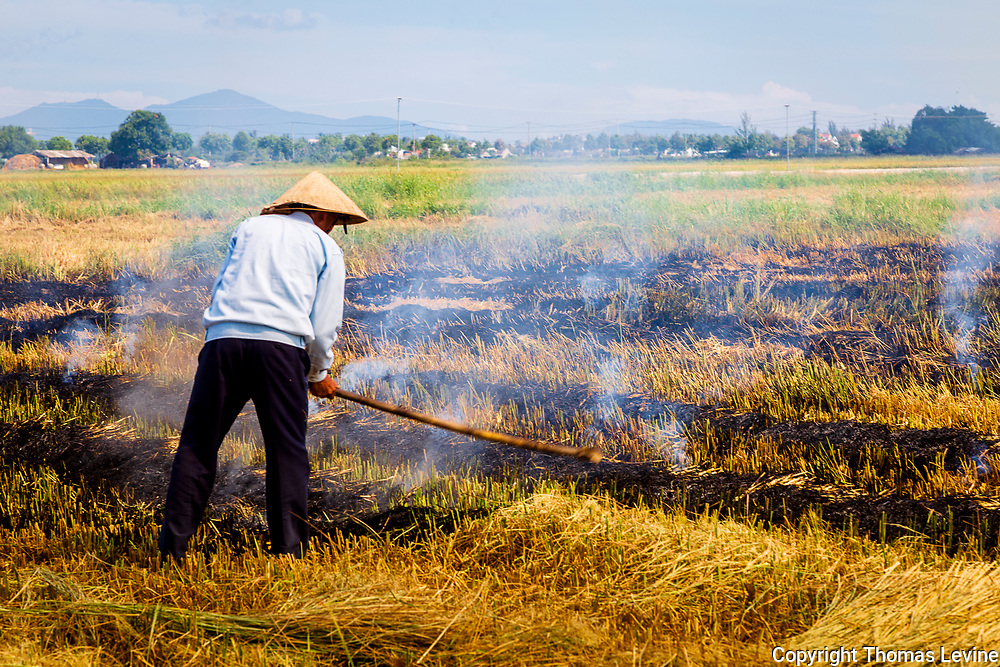 Farmer in rice field pokes a fire to burn his straw from crop.