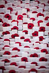 © Licensed to London News Pictures. 07/11/2012. London, UK. Crosses with poppies on are seen in the Field of Remembrance at Westminster Cathedral in London today (07/11/12). Photo credit: Matt Cetti-Roberts/LNP