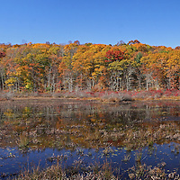 Scenic marshland photography of this beautiful New England fall foliage scenery in Connecticut near East Haddam. Connecticut photography pictures are available as museum quality photography prints, canvas prints, acrylic prints or metal prints. Prints may be framed and matted to the individual liking and decorating needs:<br /> <br /> http://juergen-roth.artistwebsites.com/featured/connecticut-fall-foliage-juergen-roth.html<br /> <br /> Connecticut fall foliage glory captured in a beautiful panorama photography image at a marsh area not for from Chapman Falls at  Devil's Hopyard State Park in East Haddam, CT.<br /> <br /> Good light and happy photo making!<br /> <br /> Juergen<br /> Prints: http://www.RothGalleries.com<br /> Licensing: http://www.ExploringTheLight.com<br /> Photo Blog: http://whereintheworldisjuergen.blogspot.com<br /> @NatureFineArt