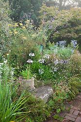 A corner at Glebe Cottage in August. Agapanthus 'Blue Gown', Eryngium bourgatii 'Blue Form', Erigeron karvinskianus, Fennel - Foeniculum vulgare and Verbena bonariensis