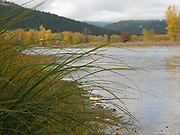 Long grass over river in the fall