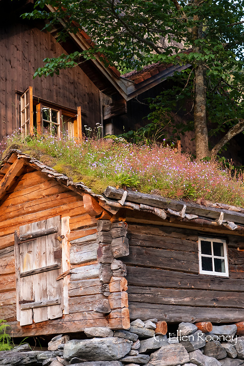 Rustic log buildings and  a sod roof in Geiranger next to Geiranger Fjord, Vestlandet, Norway