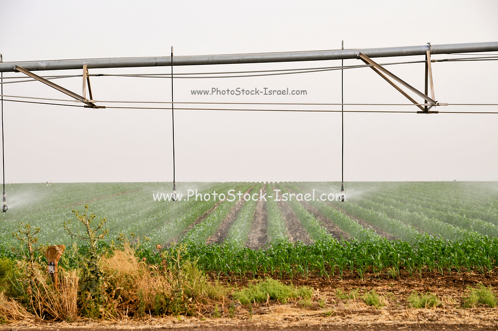 Mobile Irrigation Robot is watering a field. Photographed in Israel