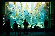 Birch Aquarium At Scripps, La Jolla, California (SD)