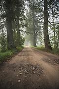 Forests and trees in Latvia Ⓒ Davis Ulands | davisulands.com