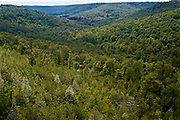 Northcentral Pennsylvania, forest valley landscape, early summer vista