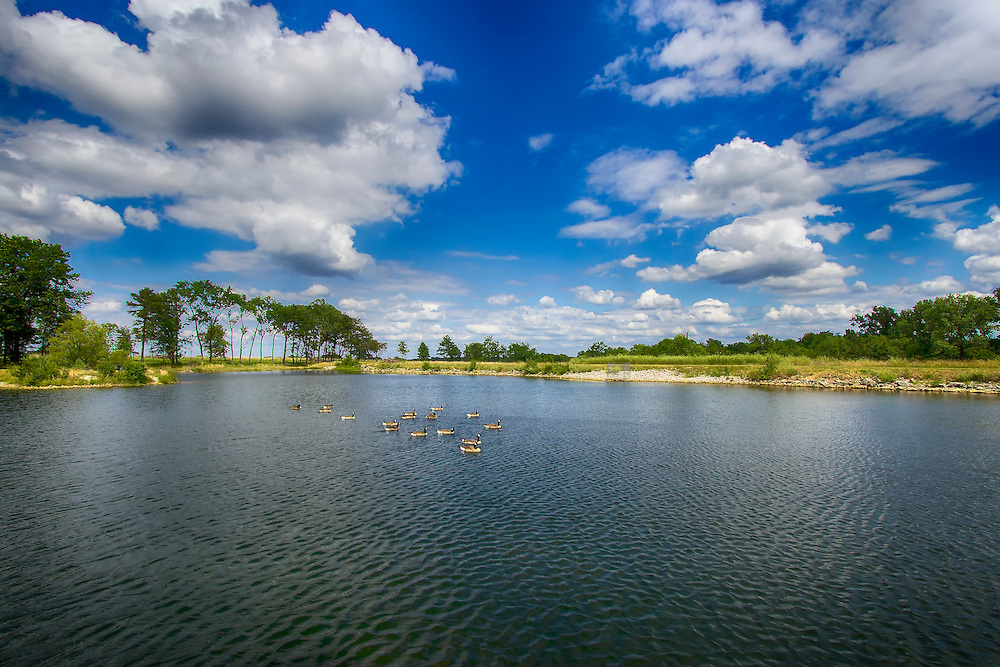 A flock of geese swim across Lake 15 at August A. Busch Memorial Conservation Area in Saint Charles, Missouri