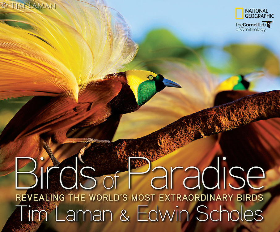 To purchase a signed copy of Tim's book: BIRDS OF PARADISE: REVEALING THE WORLD'S MOST EXTRAORDINARY BIRDS please visit our Fine Art Store with the link above.<br /> <br /> www.TimLamanFineArt.com