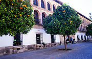 Orange trees in front of town hall building in historic old part of Ronda, Andalucia, Spain