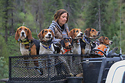 Angie Denny readies her hounds during a spring bear hunt in Idaho