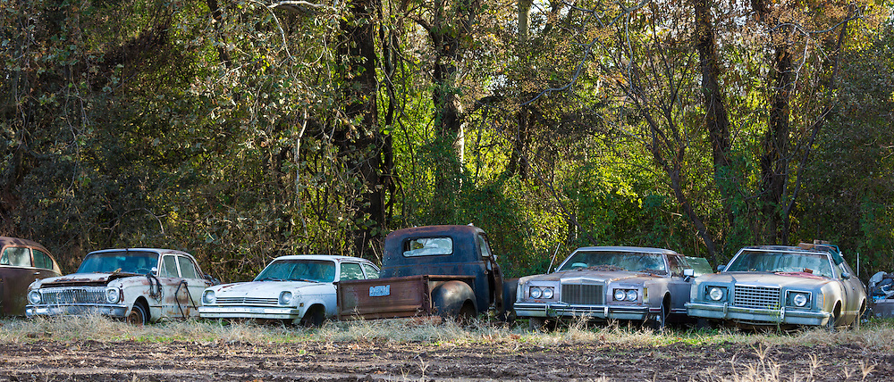 Ford, Chevvie, Pontiac, Dodge auto limos in graveyard of abandoned rusty old American automobiles, MIssissippi, USA