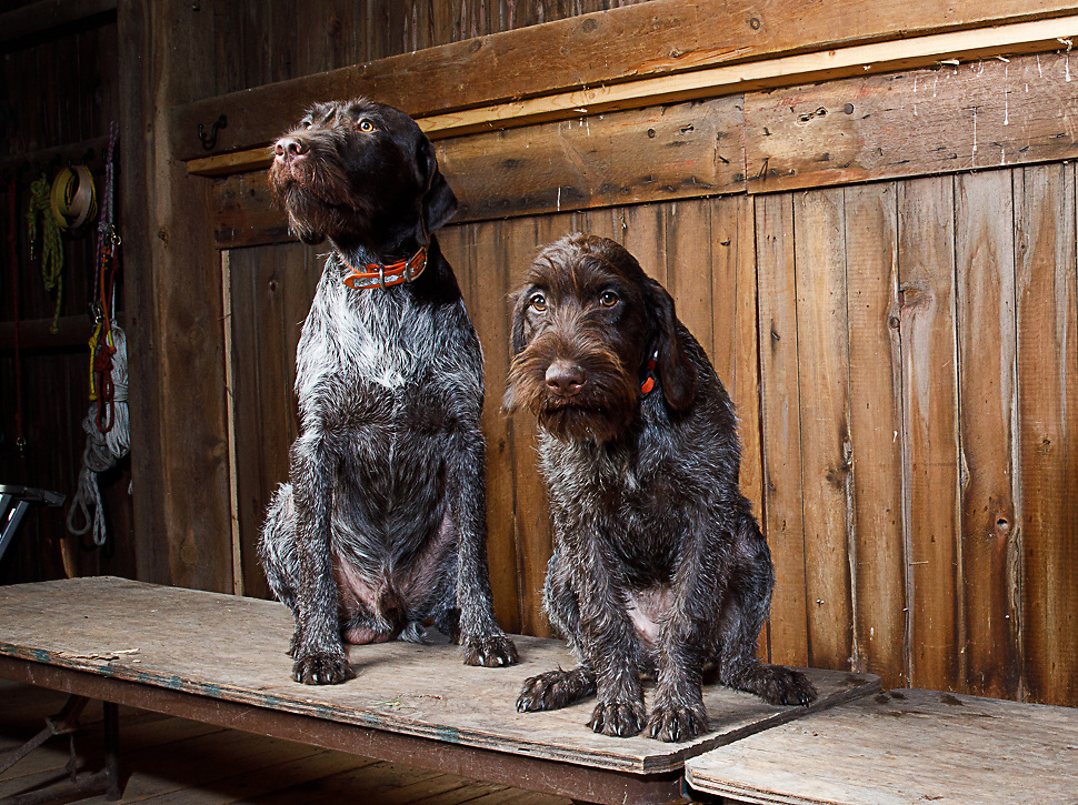 Charlie Nunemaker dogs<br /> ©Charles Cherney