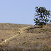 LOS ANGELES, CA, October 2, 2007: Hikers enjoy the Santa Monica Mountains by way of Malibu Creek State Park on a fall day in September, 2007. (Photo by Todd Bigelow/Aurora)